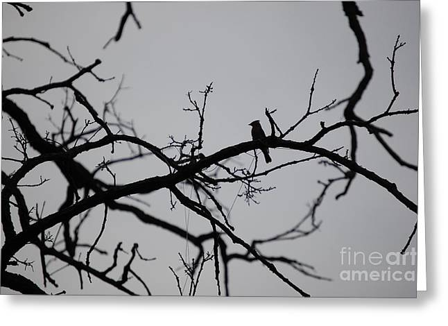 Jammer Bird And Tree Silhouette Greeting Card by First Star Art