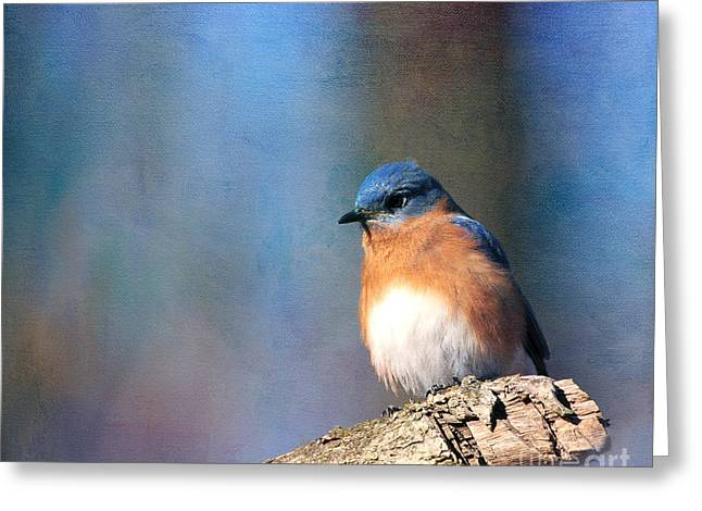 January Bluebird Greeting Card