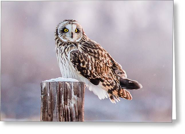 January Cold Greeting Card by Yeates Photography