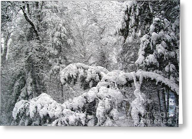 Greeting Card featuring the photograph January by Irina Hays