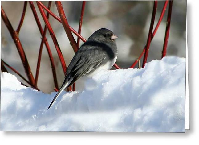 January Snow In New England Greeting Card by Barbara S Nickerson