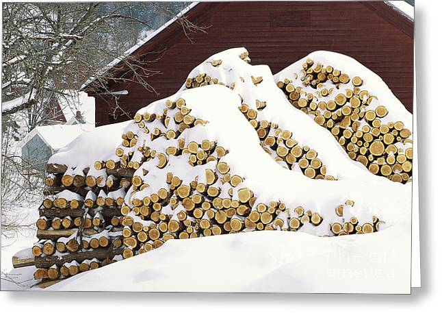 Greeting Card featuring the photograph January Woodpile by Alan L Graham