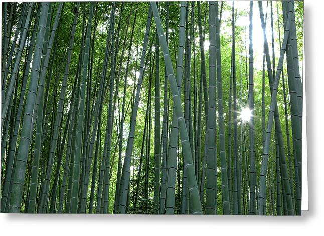 Japan, Kyoto Sunburst Greeting Card by Jaynes Gallery