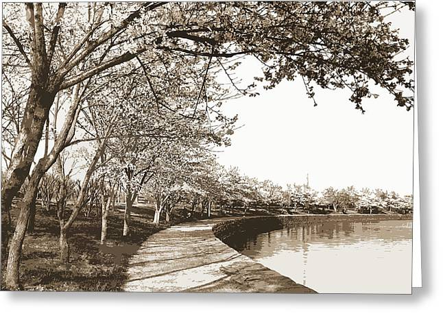 Japanese Cherry Blossoms, Cherry Trees, Waterfronts Greeting Card