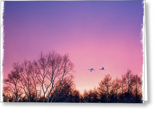 Japanese Cranes Flying To Roost Hokkaido Japan Greeting Card