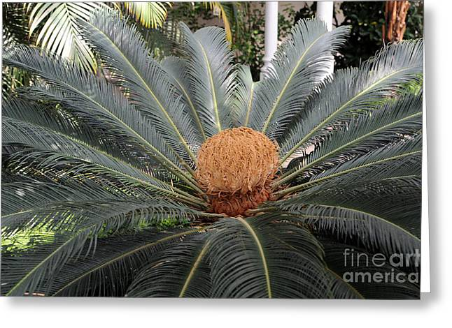 Japanese Cycad Greeting Card