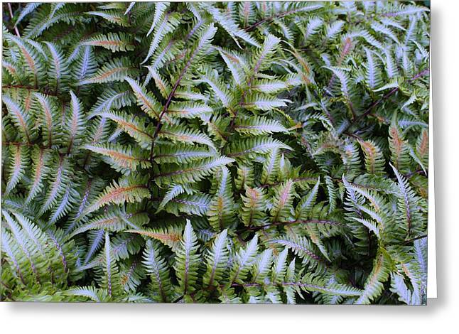 Greeting Card featuring the photograph Japanese Ferns by Kathryn Meyer