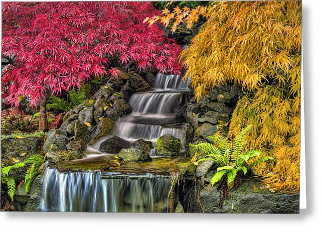 Japanese Laced Leaf Maple Trees In The Fall Greeting Card by David Gn