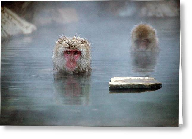 Japanese Macaques In A Hot Spring Greeting Card by Andy Crump
