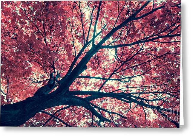 Japanese Maple - Vintage Greeting Card by Hannes Cmarits