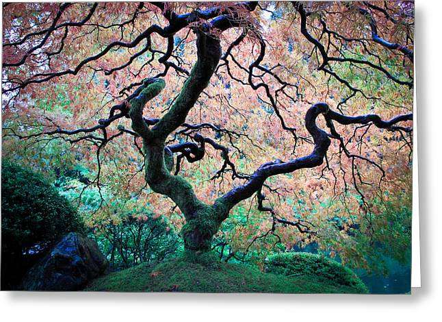 Japanese Maple In Autumn Greeting Card
