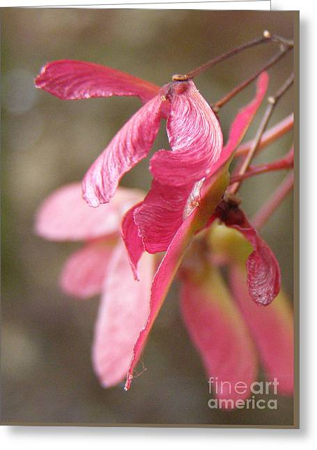 Japanese Maple Keys Greeting Card