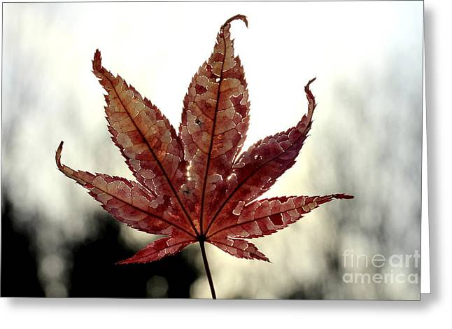 Greeting Card featuring the photograph Japanese Maple Leaf - 3 by Kenny Glotfelty