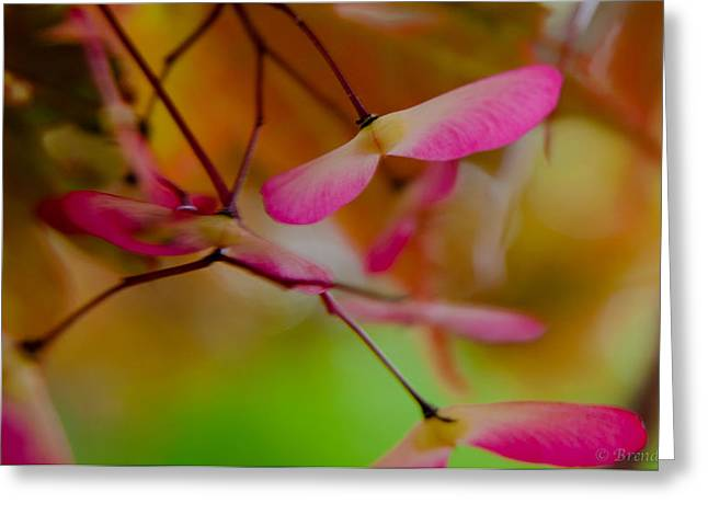 Greeting Card featuring the photograph Japanese Maple Seedling by Brenda Jacobs