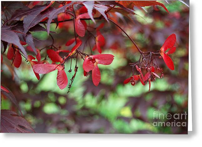 Greeting Card featuring the photograph Japanese Maple Tree by Eva Kaufman
