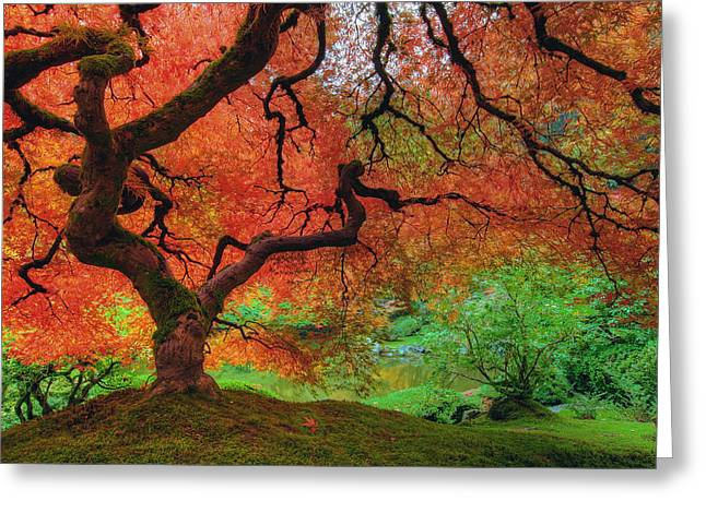 Japanese Maple Tree In Autumn Greeting Card