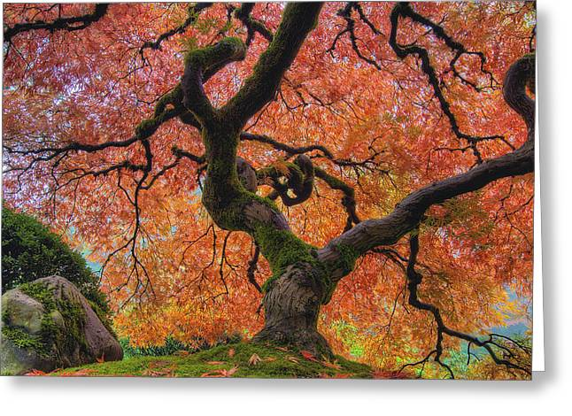 Japanese Maple Tree In Fall Greeting Card
