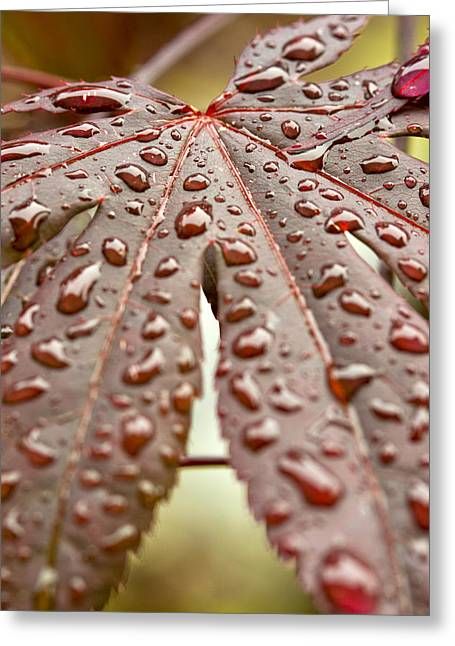 Greeting Card featuring the photograph Japanese Maple Tree Leaf Waterdrops by Bob Noble Photography