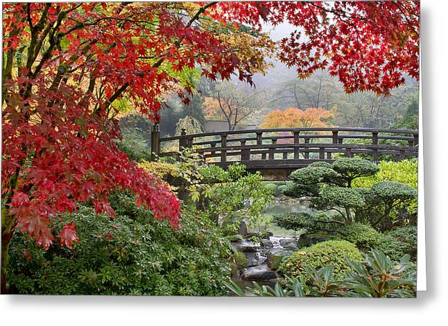 Japanese Maple Trees By The Bridge In Fall Greeting Card