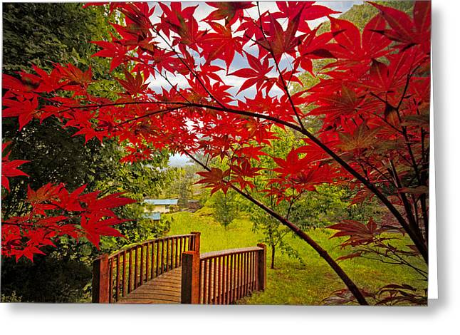 Japanese Maples Greeting Card by Debra and Dave Vanderlaan