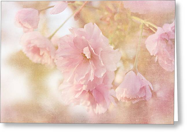 Japanese Ornamental Cherry Greeting Card by Heike Hultsch