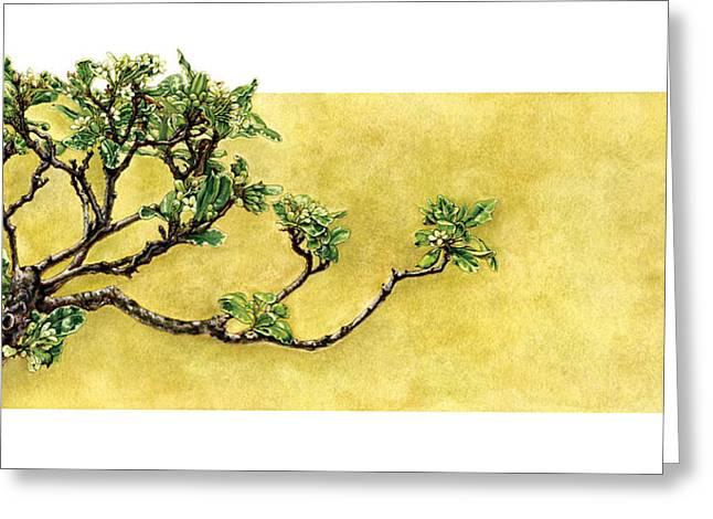 Japanese Pittosporum At The Hakone Gardens Greeting Card by Suzannah Alexander