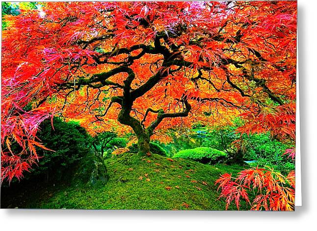 Japanese Red Maple Greeting Card