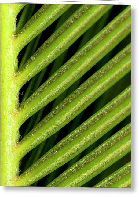 Japanese Sago Palm Abstract Greeting Card by Nigel Downer