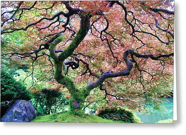 Japanese Tree In Garden Greeting Card