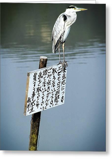 Japanese Waterfowl - Kyoto Japan Greeting Card