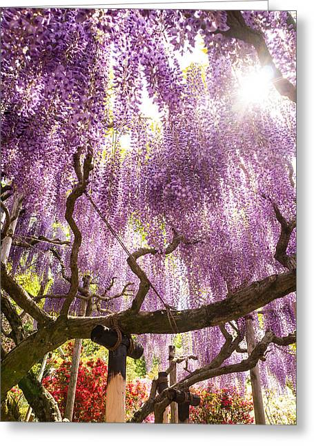 Japanese Wisteria Shines Greeting Card by Ellie Teramoto