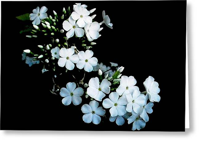 'jasmine Detail' Greeting Card