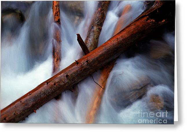 Jasper - Beauty Creek Logs Greeting Card by Terry Elniski