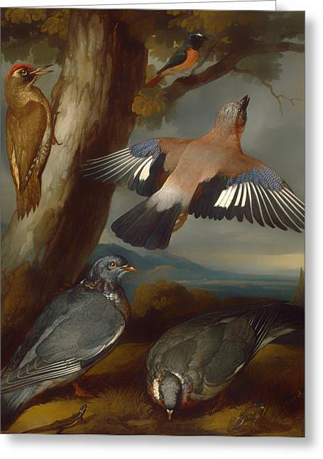 Jay Woodpecker Pigeons And A Redstart Greeting Card by Mountain Dreams