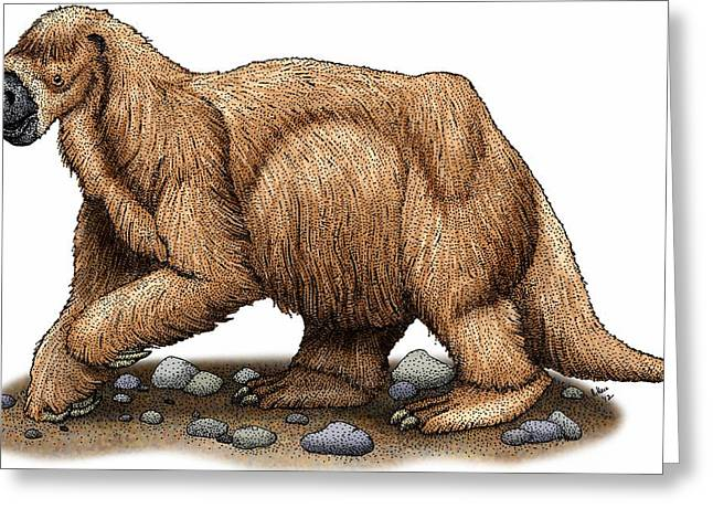 Jeffersons Ground Sloth Greeting Card by Roger Hall