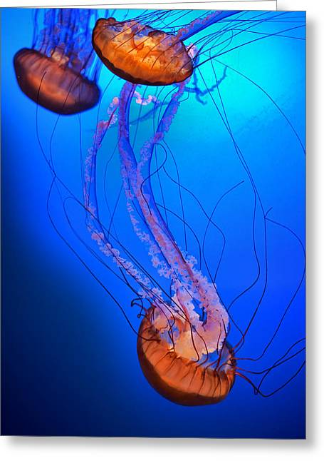 Jelly #1 Greeting Card