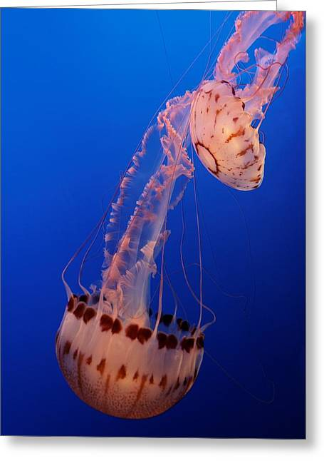 Jelly And Fishy Greeting Card