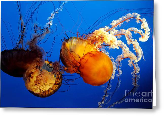 Jelly Fish 3 Greeting Card by Terry Elniski
