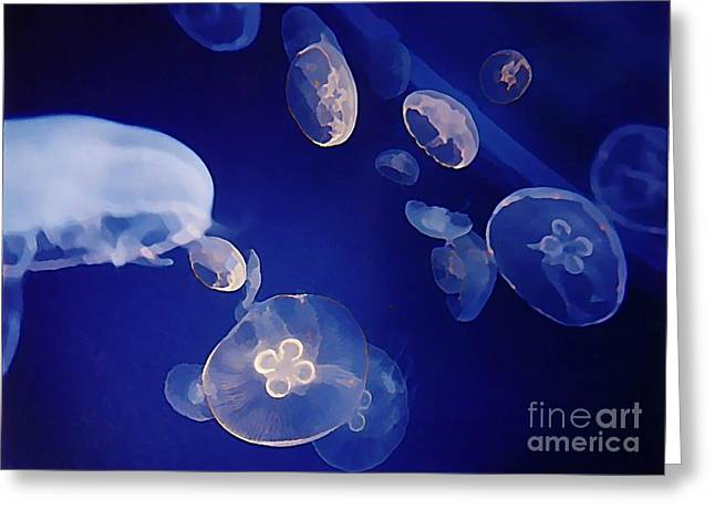 Jelly Fish Greeting Card by John Malone