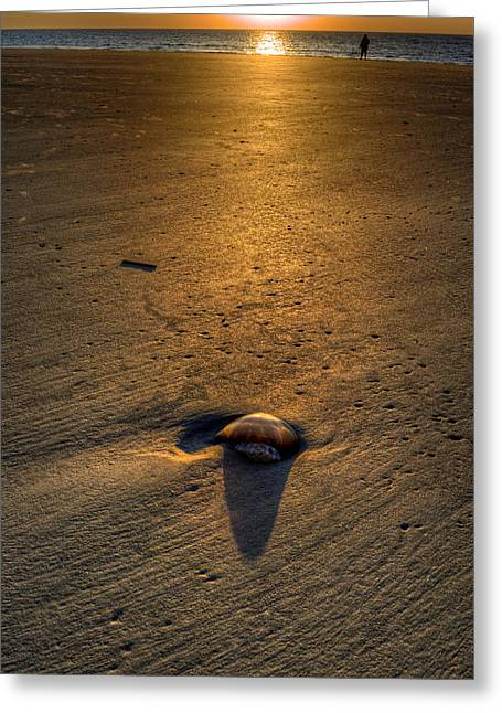 Jelly On Jekyll Island Greeting Card by Greg and Chrystal Mimbs