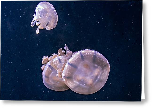 Jellyfish 2 Greeting Card by Steve Harrington