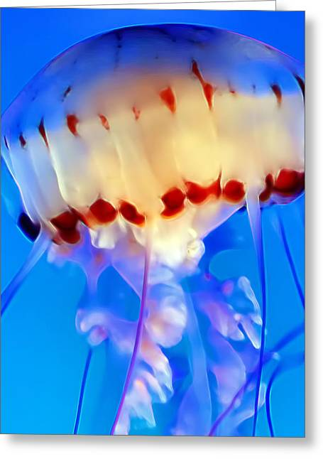 Jellyfish 3 Greeting Card by Dawn Eshelman