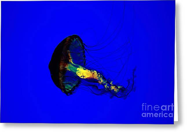 Jellyfish Greeting Card by Angelika Bentin