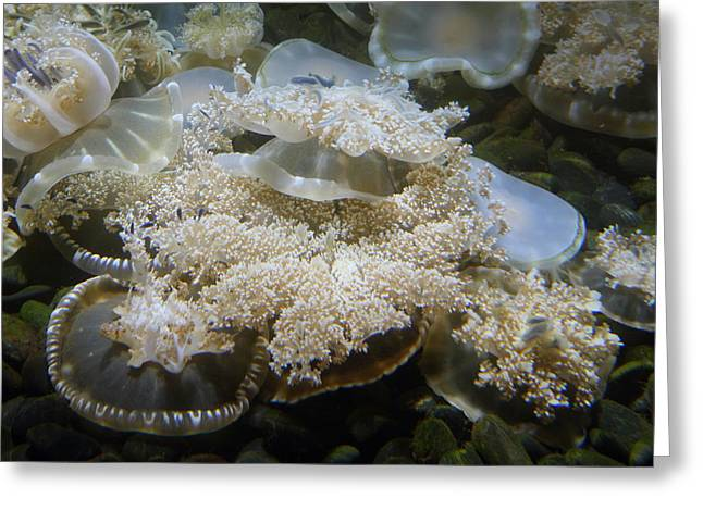 Jellyfish - National Aquarium In Baltimore Md - 121215 Greeting Card by DC Photographer