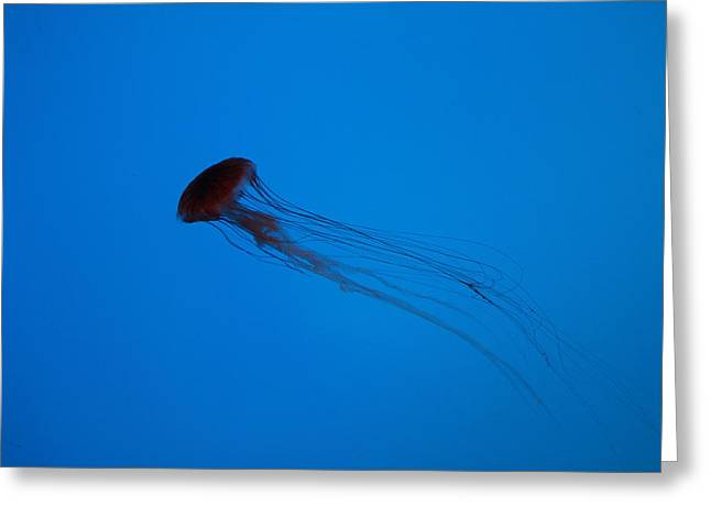 Jellyfish - National Aquarium In Baltimore Md - 12122 Greeting Card by DC Photographer