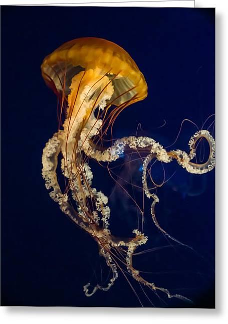 Jellyfish Rising Greeting Card by Douglas Barnett