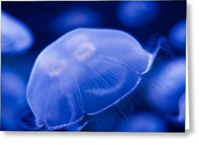 Jellyfish Square Greeting Card by Ulrich Schade