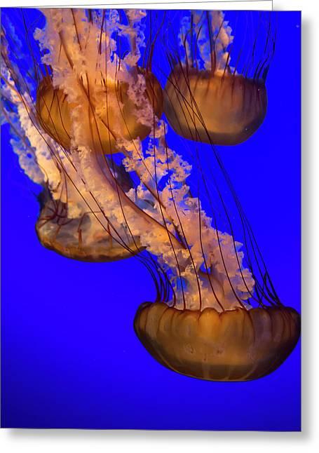 Jellyfish Undulating In Deep Blue Water Greeting Card by Sheila Haddad
