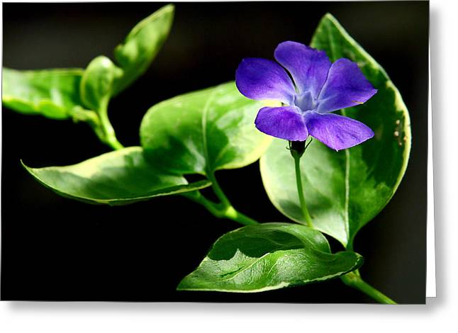 Jen's Periwinkle Greeting Card
