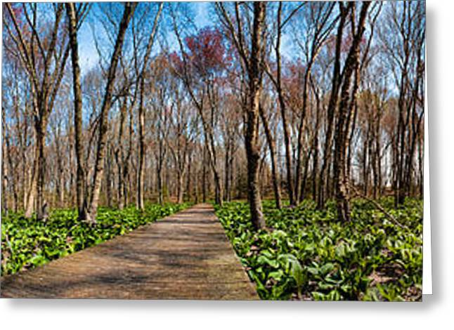 Greeting Card featuring the photograph Jersey Swamp  by Robert Culver